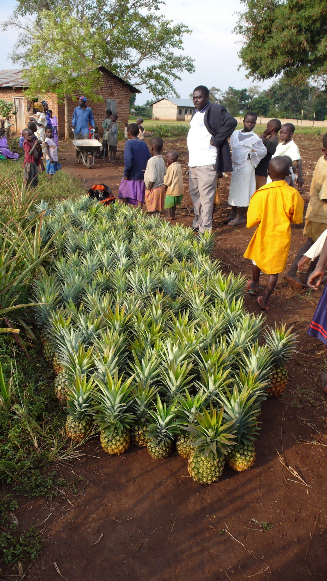 Group of people in front of harvested pineapples