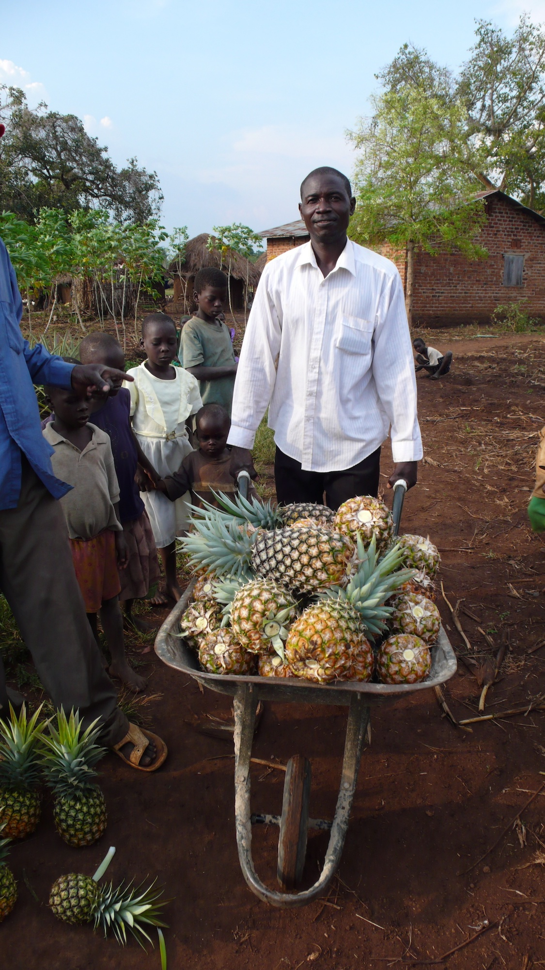 Man with wheelbarrow full of pineapples