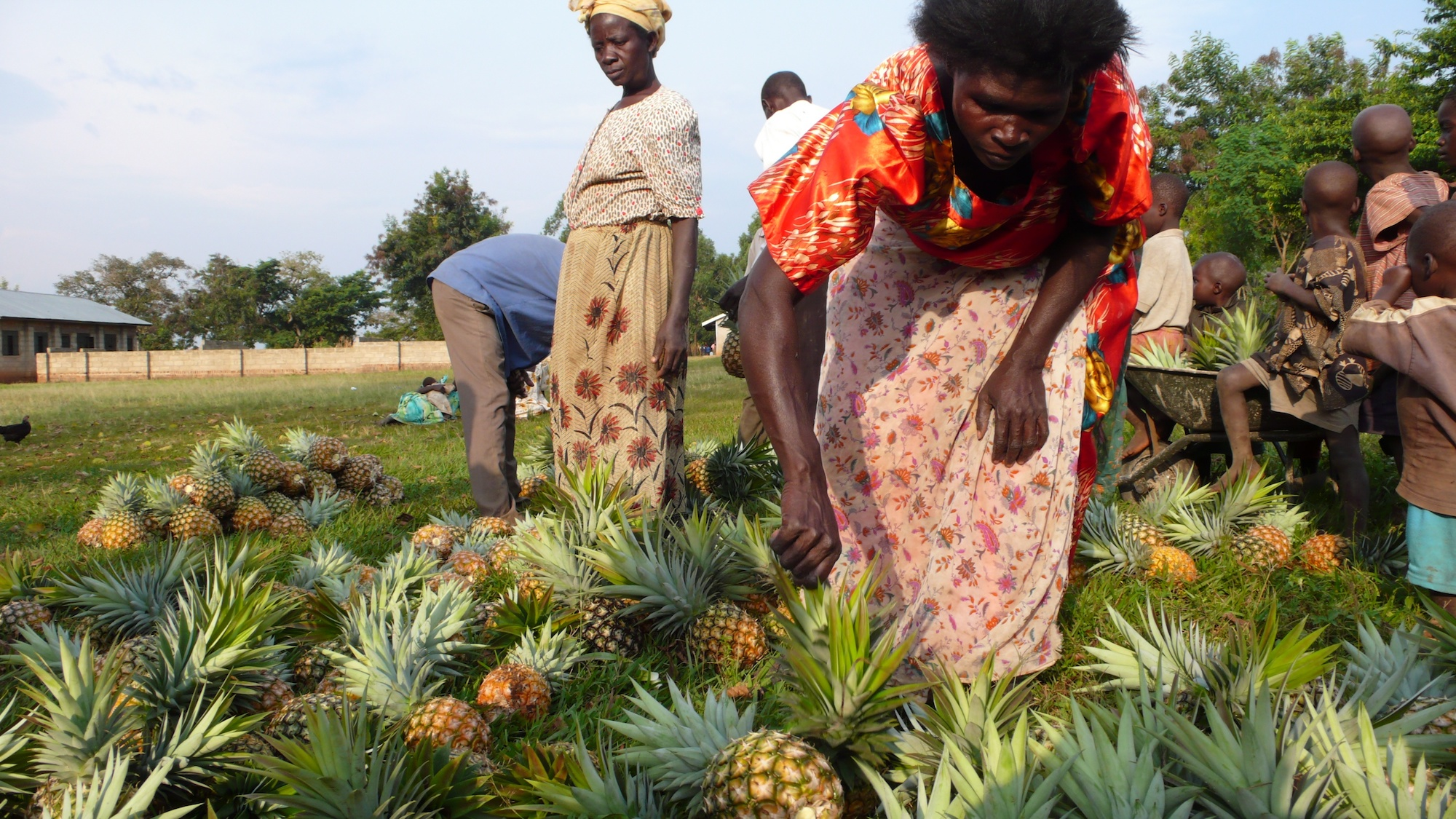 People standing amid piles of pineapples