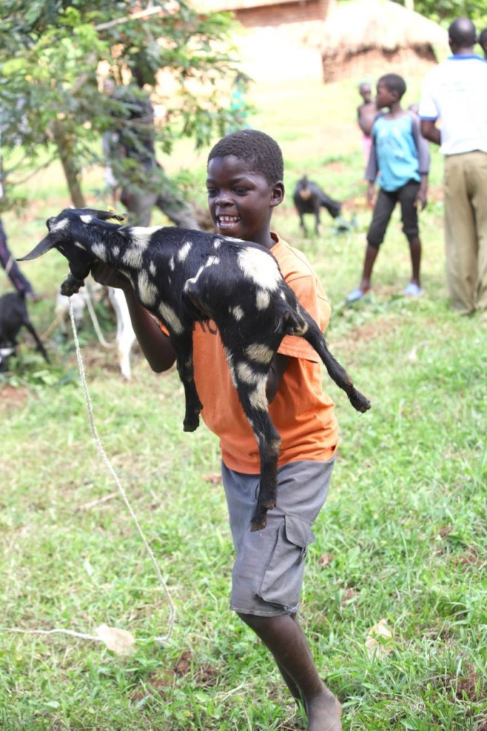 goat with boy