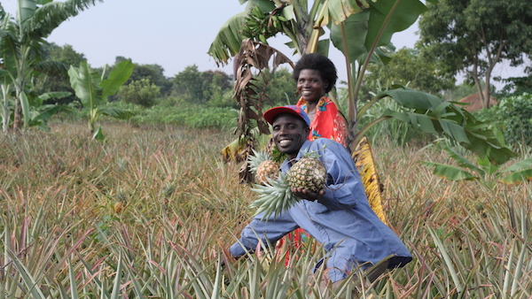 A man & a woman working in a pineapple garden