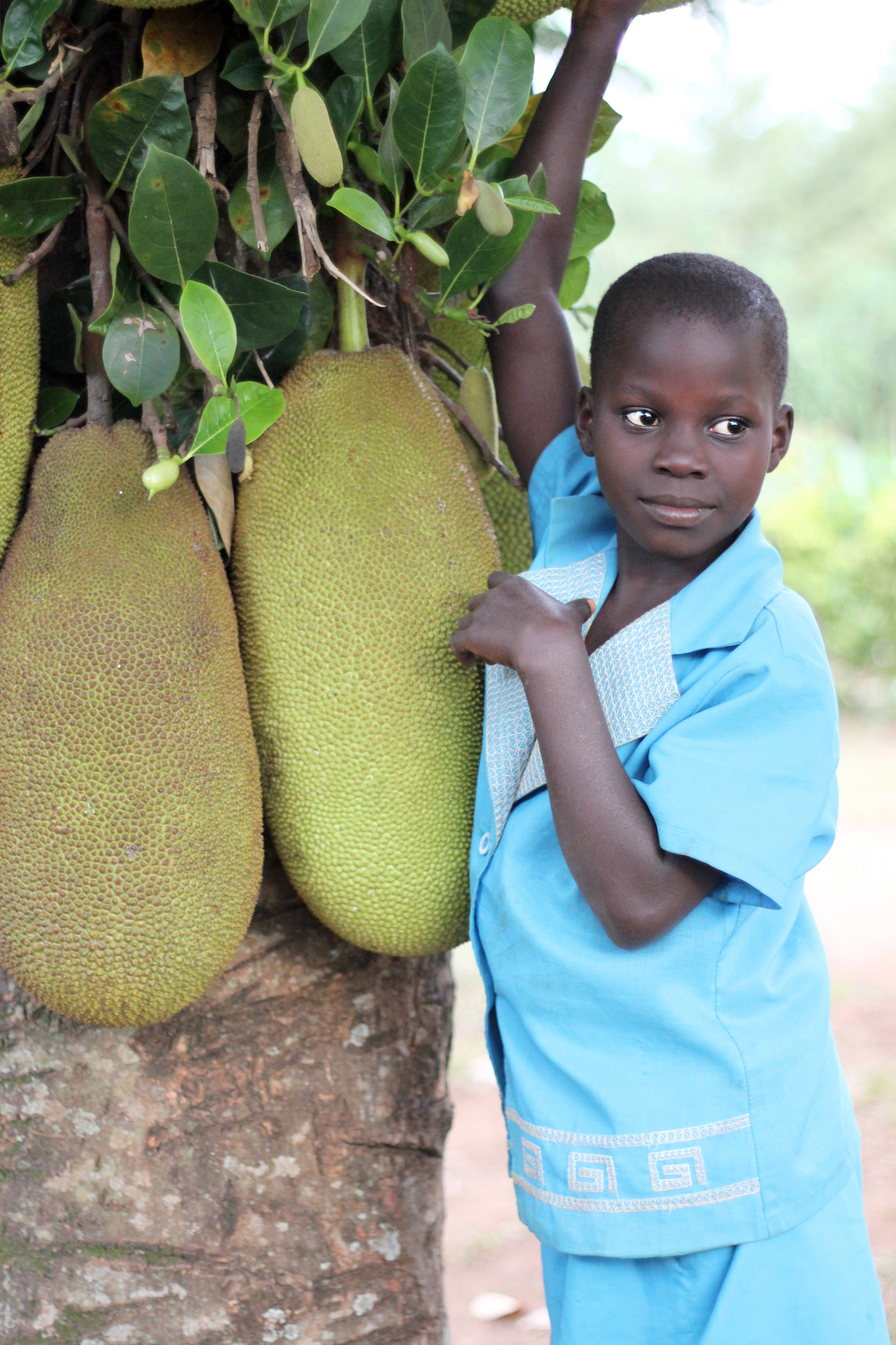 Young girl standing under a breadfruit tree