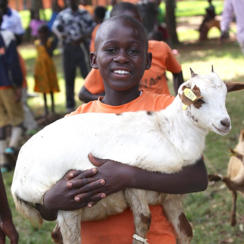 Smiling boy holding a goat